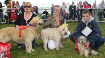 dogs-2010-dog-show-winner-1