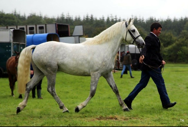swinford-agricultural-show-equine-2016_IMG_4648